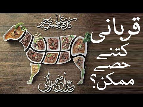 🎦  عید قربان 2   ایک قربانی میں کتنے حصے ڈالے جاسکتے ہیں؟ - Urdu