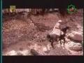 [15] شہيد کوفہ Serial : Shaheed-e-Kufa - Imam Ali Murtaza (a.s) - Urdu sub English