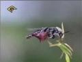 The Signs - گرده افشانی توسط حشرات - Farsi