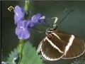 The Signs - پروانهها - Farsi