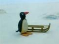 Kids Cartoon - PINGU - Pingus Tobogganing - All Languages Other