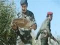 [Movies] Galogahe Sheitan - Farsi
